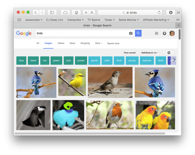 """Google image search results for """"birds"""""""