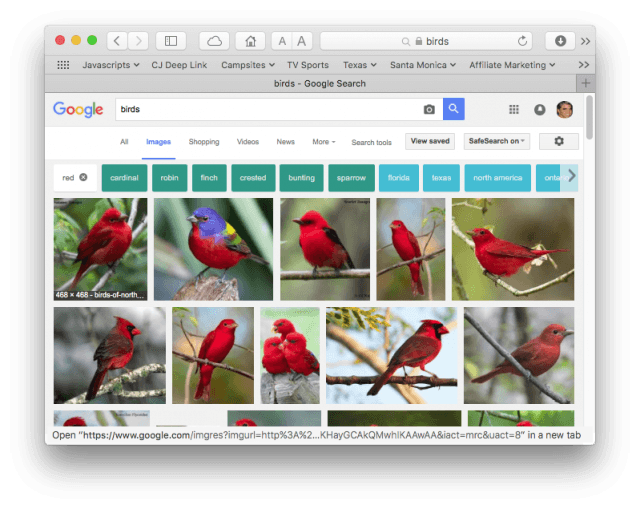 "Google image search results for ""birds"" restricted to red"