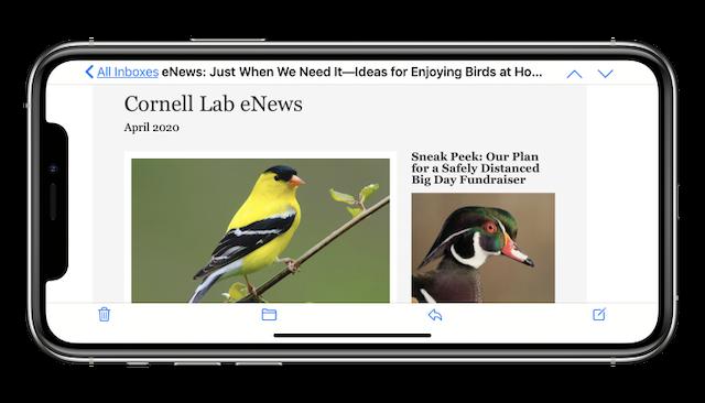 iOS Mail screenshot, horizontally oriented (landscape)