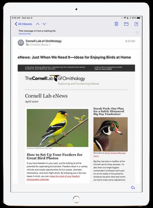 Mail message on iPad Pro 12.9, vertical orientation